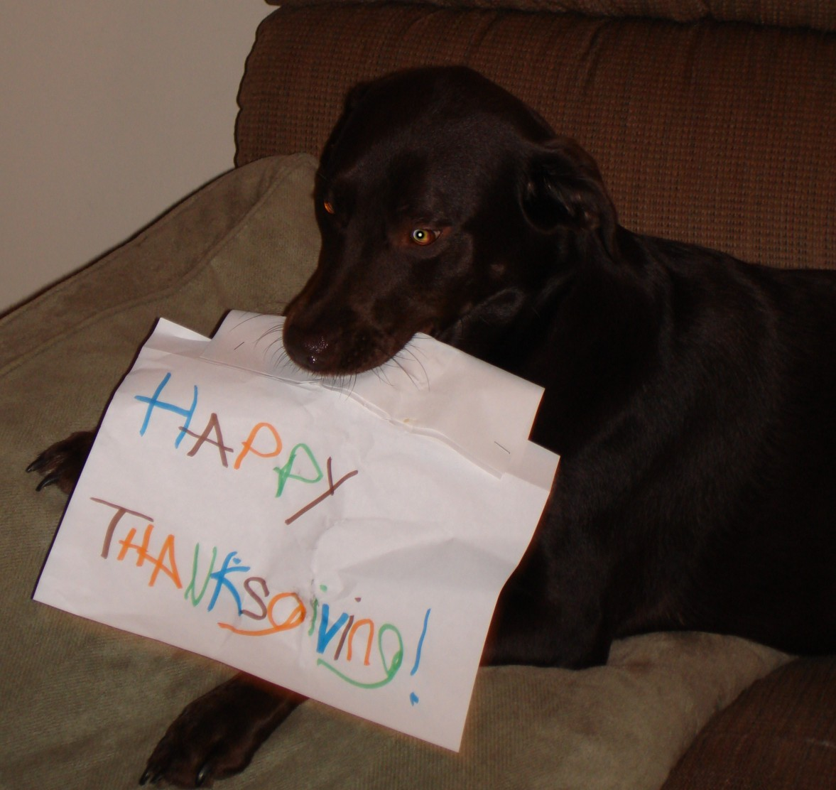 Bailey's Thanksgiving Wish