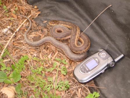 snake!  snake!